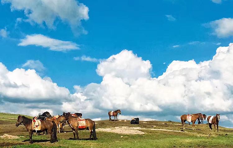 美丽的草原景色蓝天骏马